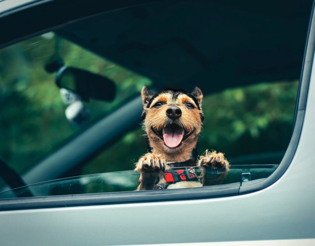 Pet Taxi Services and Transportation